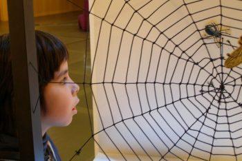 Erlebnis_Netzwerke_Spinnennetze (1)